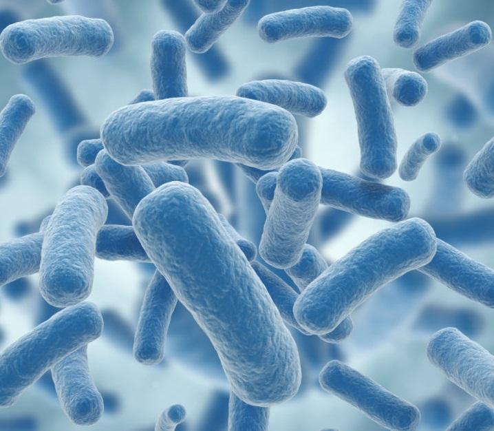 Microbiota, diabetes y obesidad